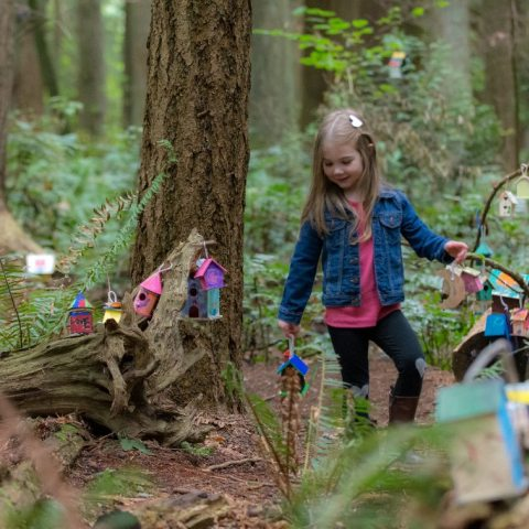 Fairy Houses of Redwood