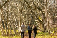 A Family, A Contest and Redwood Park